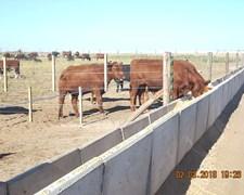 Feedlot Comederos