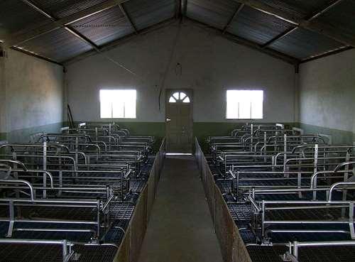 Jaulas Parideras Para Sala De Maternidad Cerdos