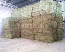 Cambio Forraje Alfalfa Por Animales