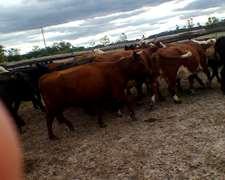 Vendo Una Jaula De Vacas Manufactura