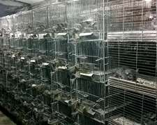 Vendo 1300 Jaulas De Chinchillas Y 80 Chinchillas Madres