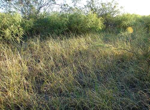 campos en algarrobo del águila campos en la provincia de la pampa