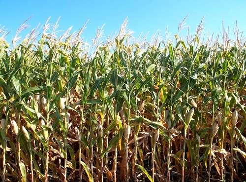 Busco campo agricola para alquilar en ameghino 2000 for Busco pieza para alquilar