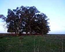 12 Has Agricolas San Pedro