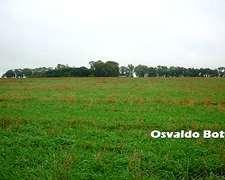135 Has Agrícolas En Gualeguaychu Los Potreros