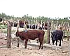 Campo En Puelen, Provincia De La Pampa 13600 Ha