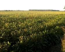 81 Has Campo Agrícola En Zona De Desarrollos En El Remanso