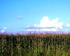 Alquilo Campo Agricola 600 Has Norte Entre Rios