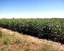 Campo Agrícola – 1.100 Has. - Ref. Ca0006: