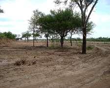 Campo En Formosa. Sobre Ruta Pavimentada En Lugones 1030 Has