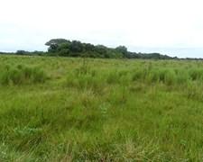 Formosa Campos.3300 Ha. Laishi.formosa