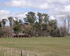 55 Has Campo En Areco Con Casa Y Arboleda