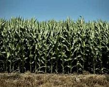 Alquilo En 9 De Julio De 1000 A 3000 Has Agricolas