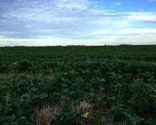 Venta Campo Agrícola-ganadero Blaquier