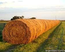 Rollos De Alfalfa Excelente Calidad $1400/tn