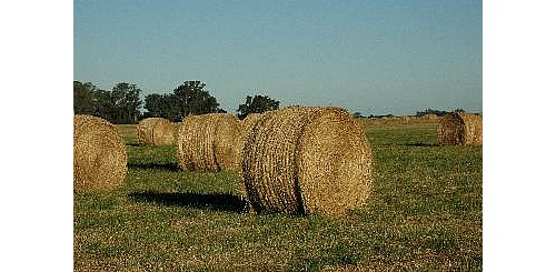 Venta De Rollos Pasto/pastura Desde $600
