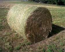 Rollos 100% Alfalfa (2do Corte)