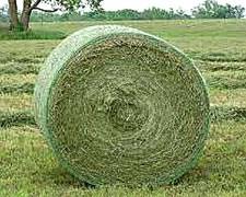 Vendo Rollos De Alfalfa