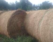 Vendo O Permuto Por Vacas De Cria Rollos De Alfalfa Puros