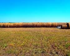 Vendo Rollos De Alfalfa Producidos Sin Agrotóxicos.