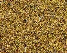 Compramos Semillas De Alfalfas A Productores En Todo El País