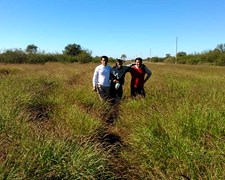 Semilla De Pasto Buffel Grass -